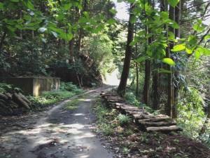 嶺坂山線途中2