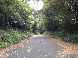嶺岡中央林道2号線:路面状態
