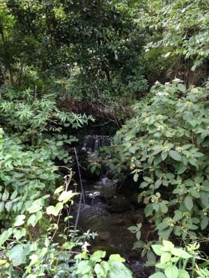 熊取線:滝