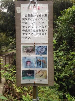 加茂線:危険生物