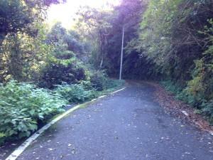 千倉線:前半路面