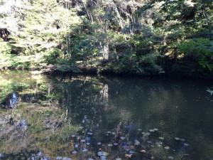 小松寺:池2